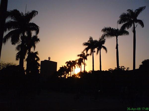 台大椰林3.JPG