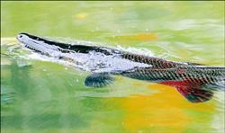 鱷雀鱔 6.16..jpg