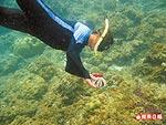 觀察海底生物 6.14..jpg
