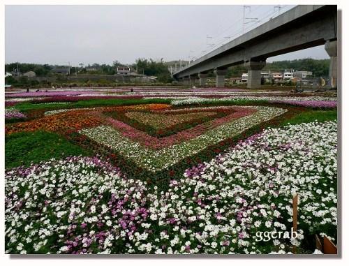 通霄城北里花海  1.7..jpg