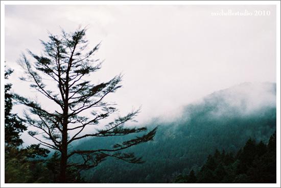 寒冬暖陽的太平山 1.17..jpg