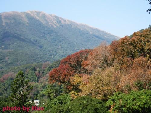 草山楓香紅似火 2.jpg