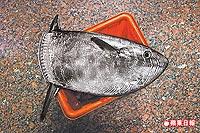 斑點長翻車魚 2.3..jpg