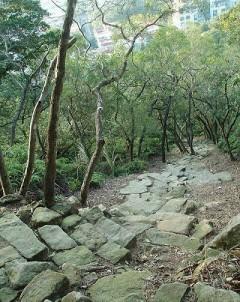 金面山登山步道 2.5..jpg