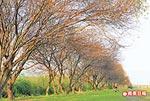 宜蘭 河濱公園 2.8..jpg