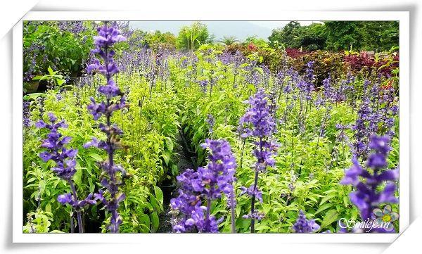 仁山植物園7.jpg