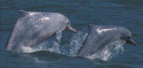 瓶鼻海豚.jpg