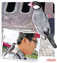 黑文鳥 跟班 2.26..jpg