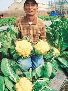 黃金花椰菜 2.28..jpg
