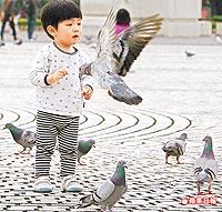 鴿糞害少年腦膜炎 2.28..jpg