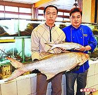 罕見 26斤大鯃魚 3.12..jpg