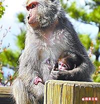 可愛小彌猴 3.15..jpg