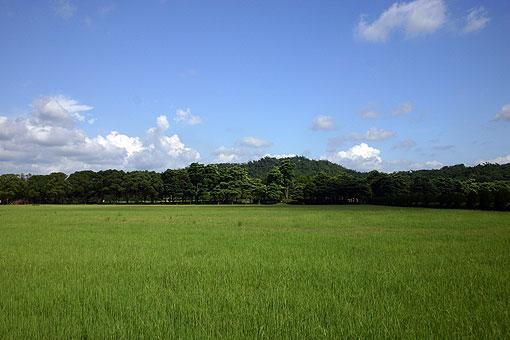 走馬瀨農場3.jpg