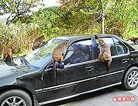 潑猴霸車 4.6..jpg