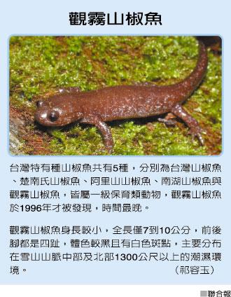 觀霧山椒魚 4.11..jpg