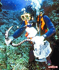 溫馴海蛇 與人同游 4.27..jpg