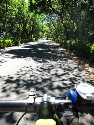 新豐自行車 綠色隧道 2.jpg