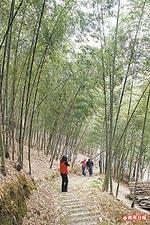 孟宗竹林步道12.2.jpg