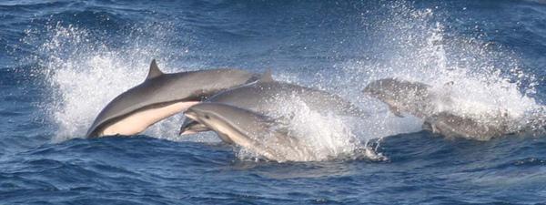 弗氏海豚2.jpg