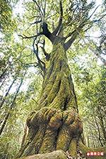 樹瘤的奇樹  5.28..jpg