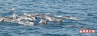 海豚跳躍 7.12..jpg
