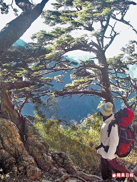 布玉山連峰的冷杉植群 12.31..jpg