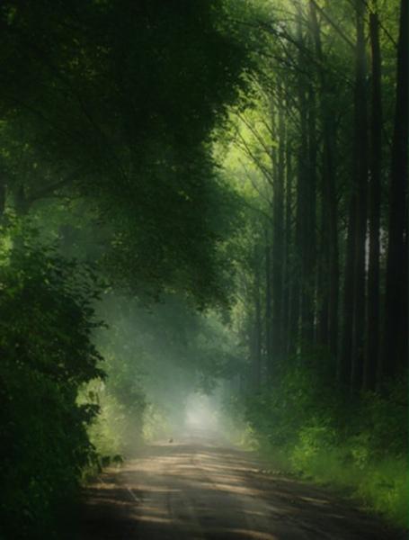 杉林溪.jpg