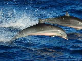 弗氏海豚 7.12..jpg