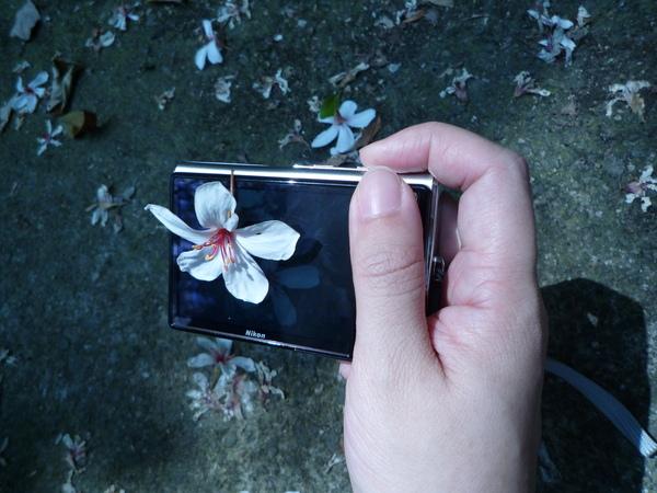 桐花和我的相機