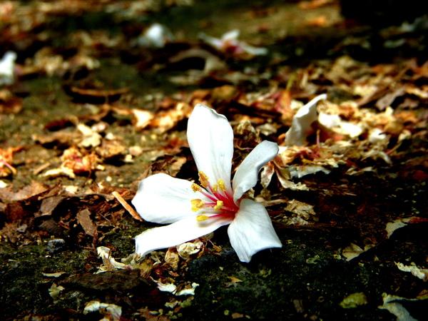 白色的花和深色的路