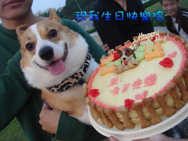 祝我生日快樂吧