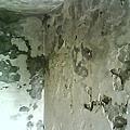 壁癌1.jpg