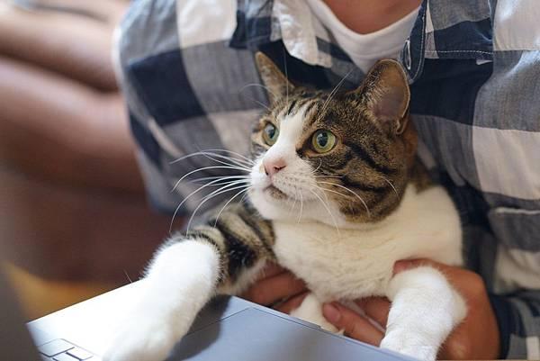 cat-5331883_1920.jpg