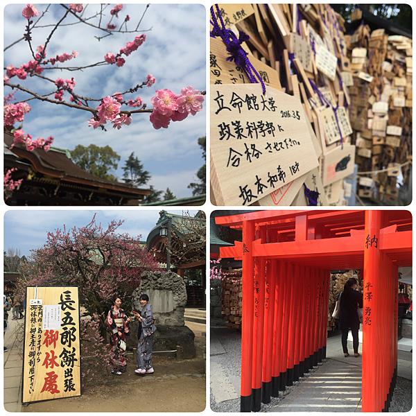 日本關西梅花季賞梅一覽表
