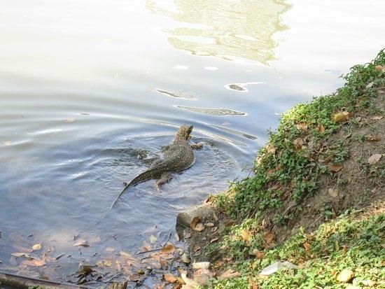 【倫披尼公園Lumphini Park】曼谷情侶家人踏青景點推薦