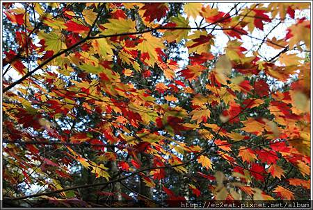 2013 10 21-IMG_6313.JPG