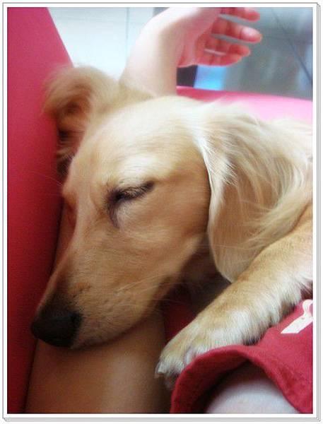 枕著我的手睡,miko是人嗎