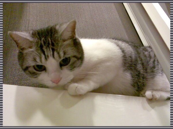 我是公主貓,不跟狗做朋友的!