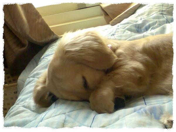 睡姿千奇百怪