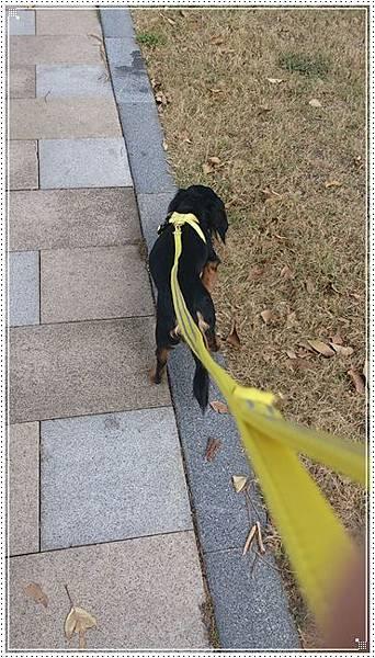 dogness008.jpg