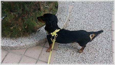 dogness009.jpg