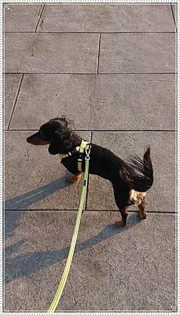 dogness010.jpg