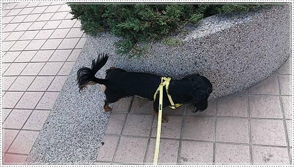 dogness011.jpg
