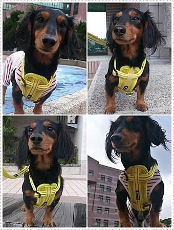 dogness012.jpg