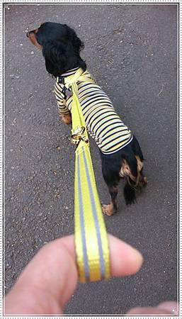 dogness014.jpg