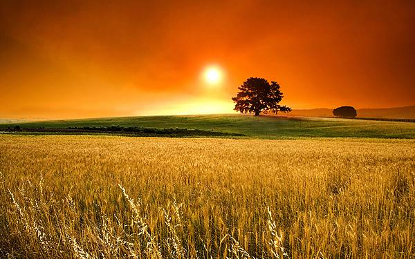 Summer-sunny-days-beautiful-sunset-over-de-wheat-field_2.jpg