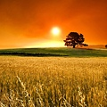 Summer-sunny-days-beautiful-sunset-over-de-wheat-field_2.jpg
