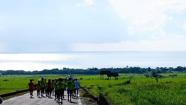 04_跑友沿著筆直的金剛大道一路奔向太平洋的懷抱,大道兩旁映入眼簾的是綠油油的稻浪。(2).JPG