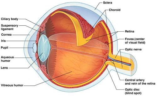 retina_eye.jpg