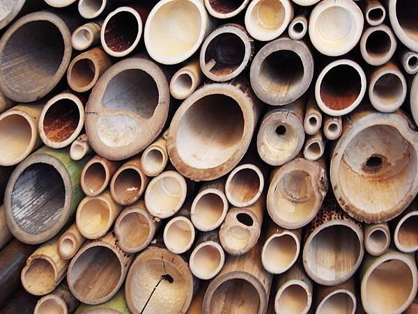 bamboo06.jpg